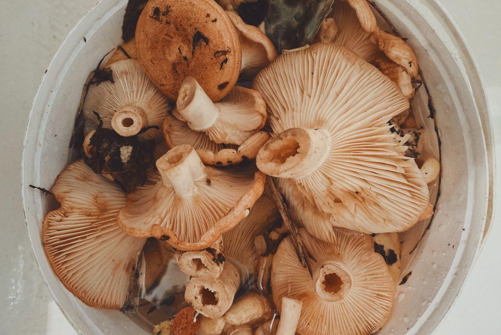 Umami Mushrooms