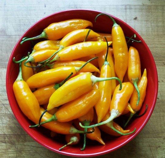 Aji-Amarillio-peppers