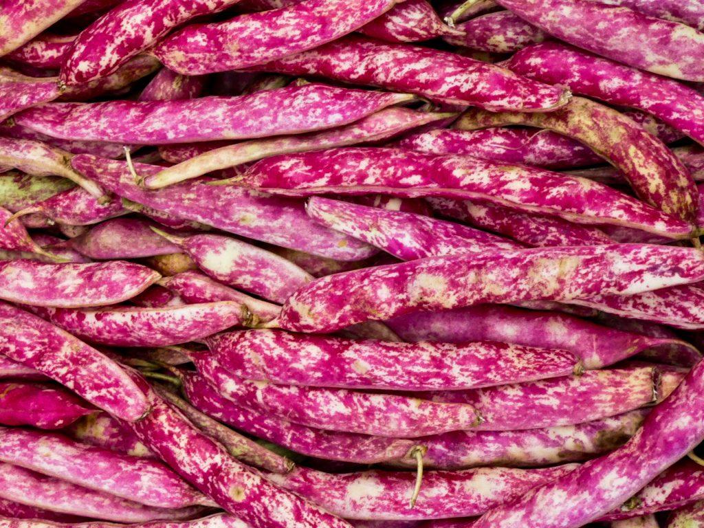 raw borlotti beans